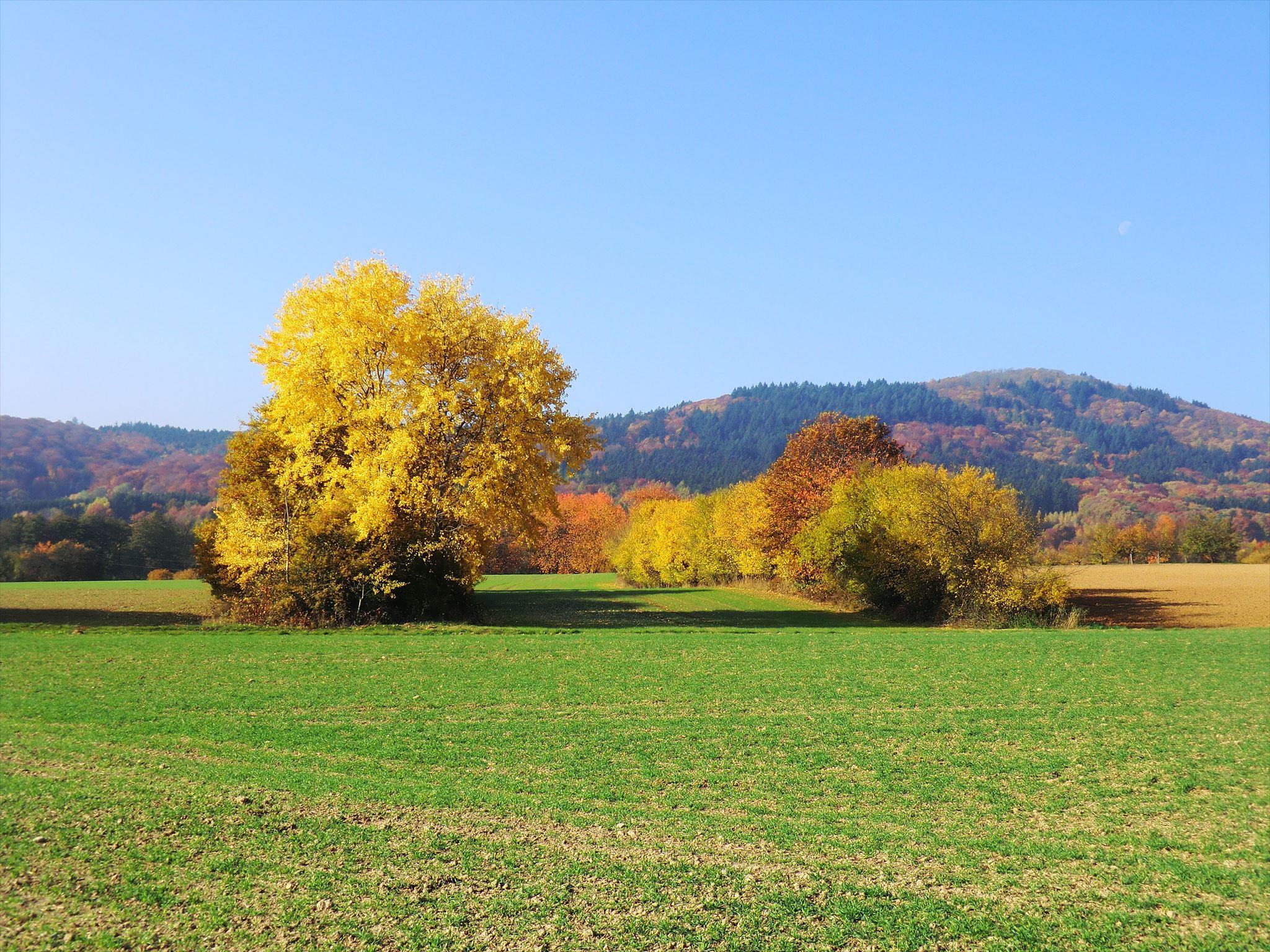 Herbstliche Wiesen am Rettershof