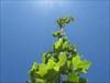 03 crescer para o sol log image