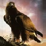 eagle_69