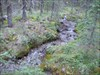 A stream running through the forest