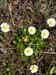 Jarní kvetena ve Francii 12.4.2013