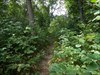 """Click to view """"beautiful, but overgrown trail"""