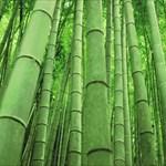 Nakedbamboo