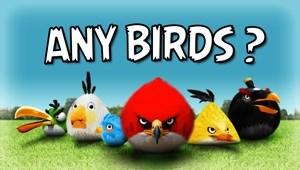 ANY BIRDS? (Logo)