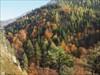 ....goldener Herbst....