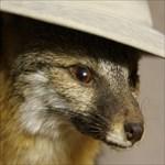 Ranger Fox