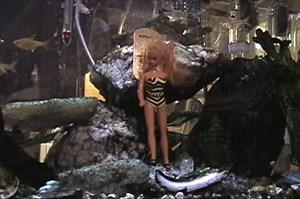 Barbie explores the tropics
