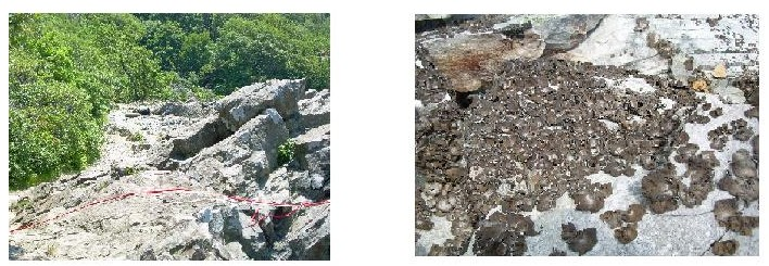 WAYPOINT #4: LEFT- Rocks showing human impact-no lichen / RIGHT- Less human impact-lichen covered rock
