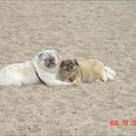 meandmydogs