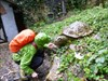 Schildkrötefüttern