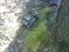[VPK08]-[GC1AH3G]-[Telefoon in het bos??]