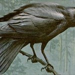 Carion Crow