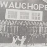wauchope