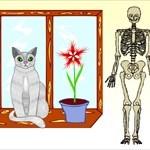 Boneychest & Catsuey