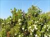 flora I