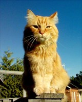 Our beloved Simba: 2002-2011