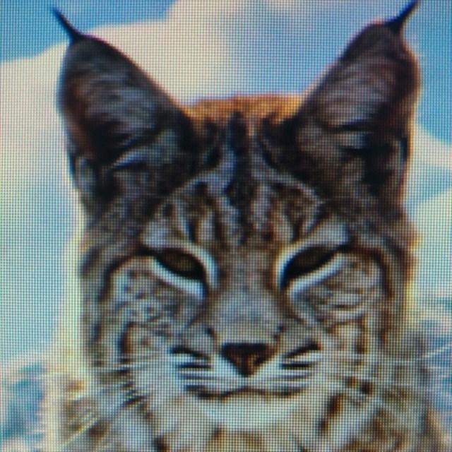 avatar de pelo39