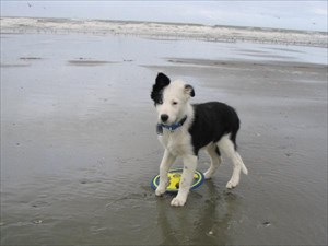 Aan het strand 3 maanden oud