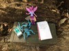 Miss Twilight sparkle at Shawnee Lookout Cache