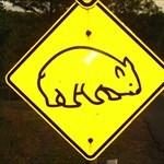 Wombat97
