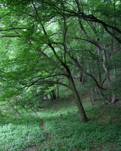 Les v jižní části rezervace