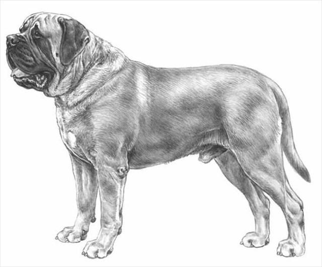En hund