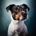 Terrier_Cacher