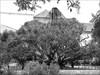 Jardim Botânico Suspensórios
