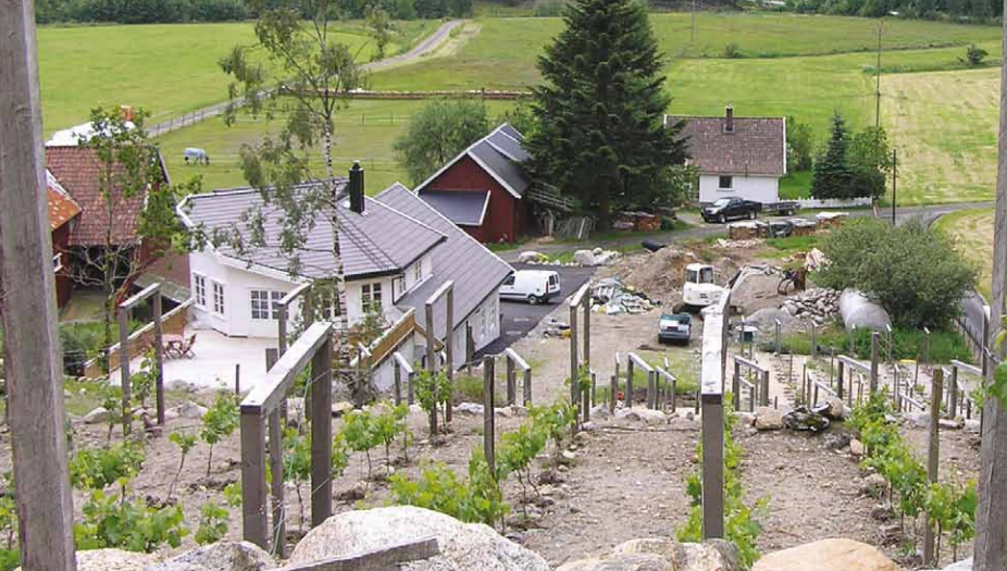 vinproduksjon i norge