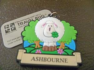 Ashbourne Sheep 1