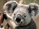 avatar de koala-85
