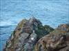 A homenagem ao pescador log image