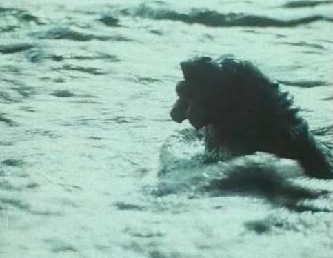 Plavajici ropak/Swimming ropak