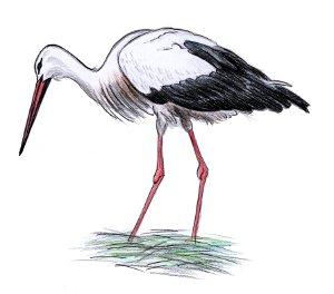 ceske loznice velký ptáci