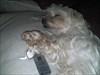 onze viervoeter met Nonnies puppy Viervoeter 'Hoefje' lag lekker te slapen met nonnies puppy