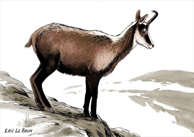 avatar de Chamois74