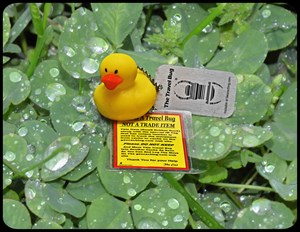 Yellow Rubber Duck on Clover With Water Droplets.