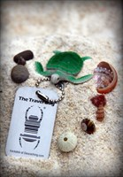 Wasabi, the Green Sea Turtle TB