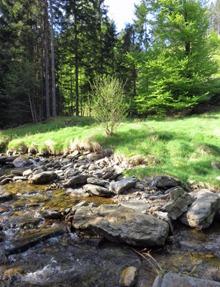 Potok s paloukem