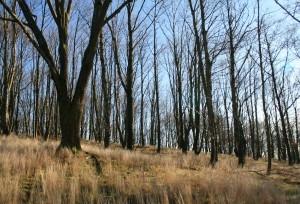 Stromy na okraji paseky