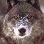 WolfWalker