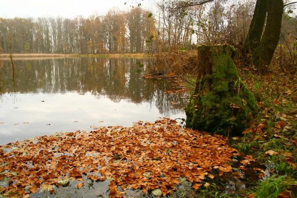 Břeh na podzim
