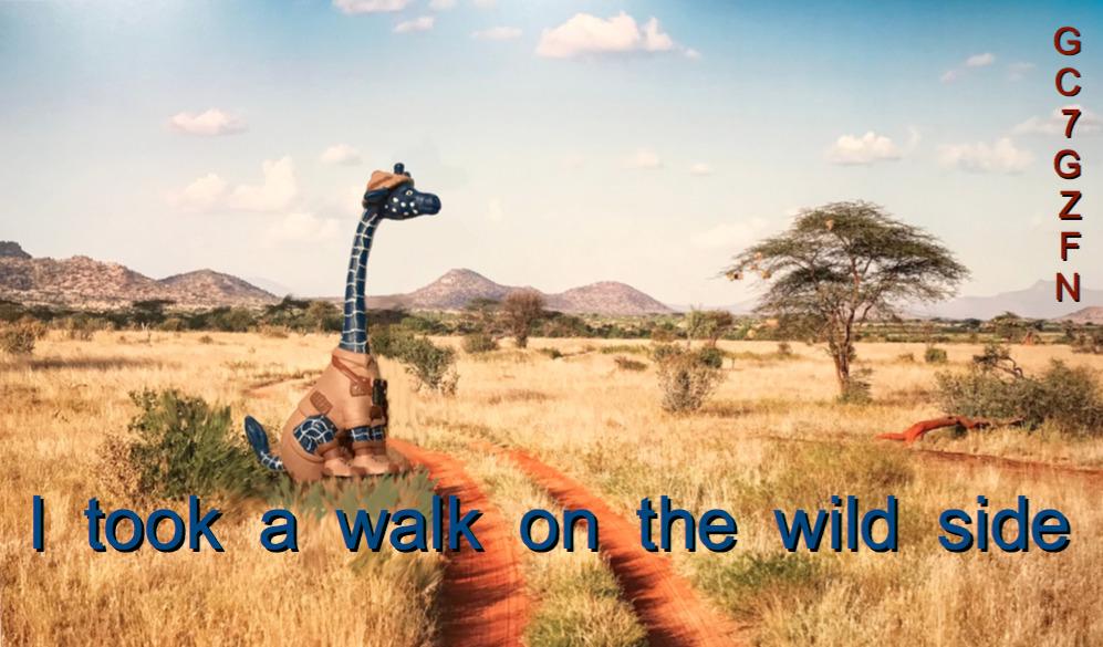 Giraffe on wilderness Afrika-Safari