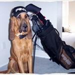 S A Bloodhound