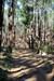floresta log image