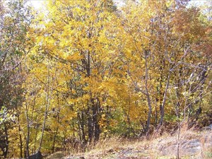 The Preserve in Autumn