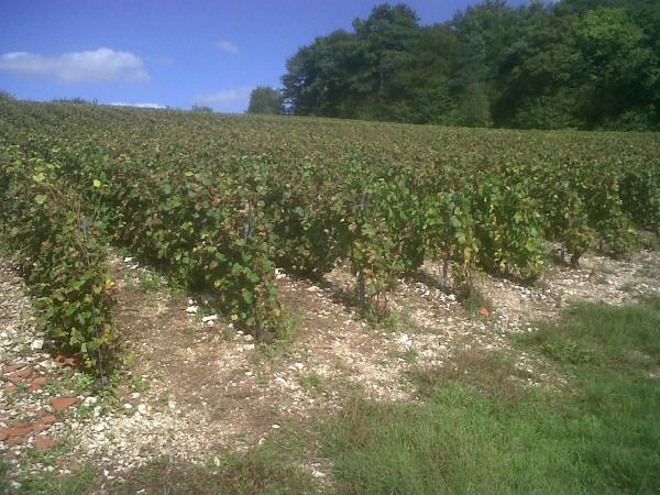 Gc32tmb les raisins du souvenir unknown cache in grand for Pays de chaumont