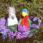 Birdie Moms