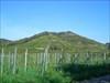Der Kaiserstuhl ist vulkanischen Ursprungs ...