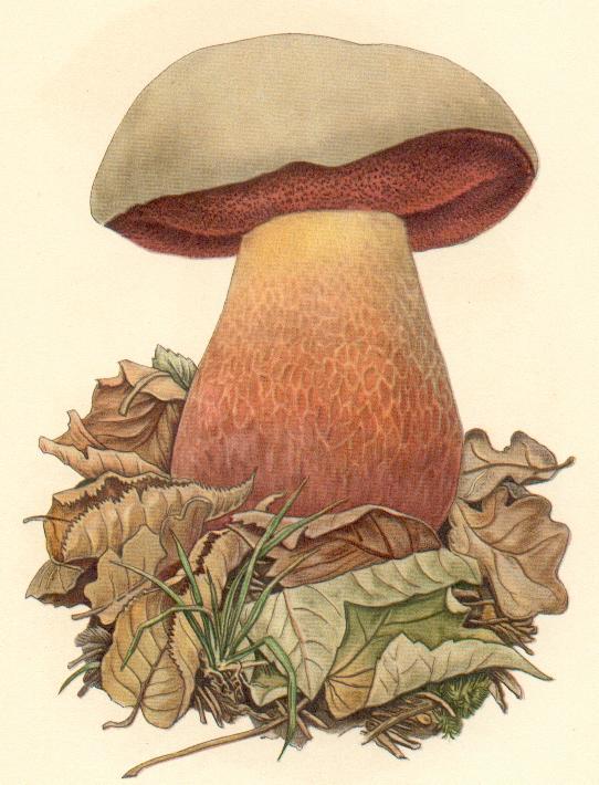 Pilz (Serviervorschlag)